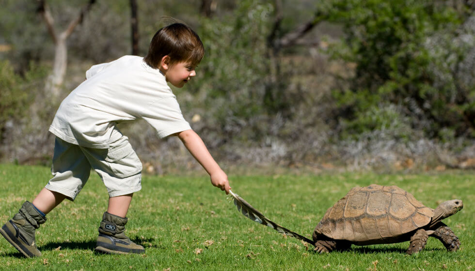 Tickling a tortoise! Samara Private Game Reserve, Great Karoo, South Africa
