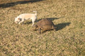 archie & the tortoise