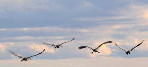 Flight of birds2