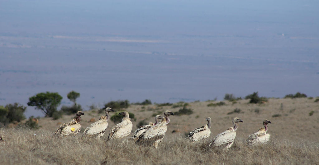 The group of Cape Vultures, photographed by Tendai Moyo