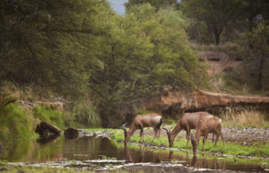 Red Hartebeest, Samara Private Game Reserve, Great Karoo, South Africa