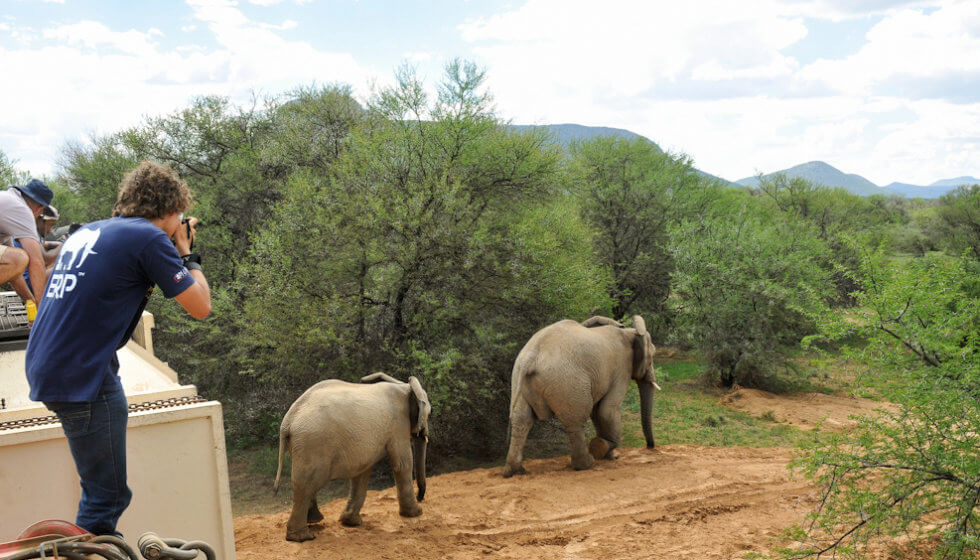 Elephants are released at Samara Private Game Reserve, Great Karoo, South Africa