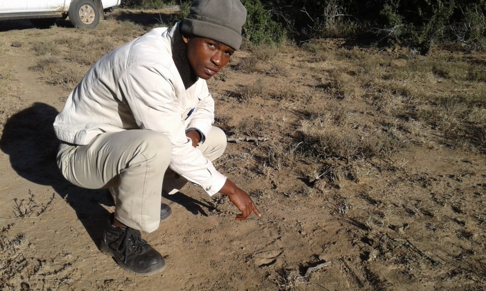 Ntsindiso, tracker intern, points at elephant tracks, Samara Private Game Reserve, Great Karoo, South Africa